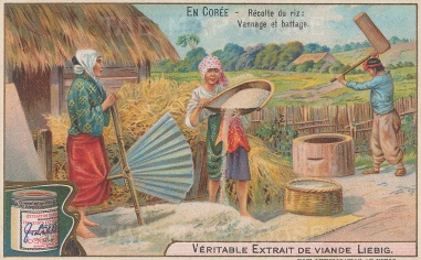Rice production: Threshing and winnowing.