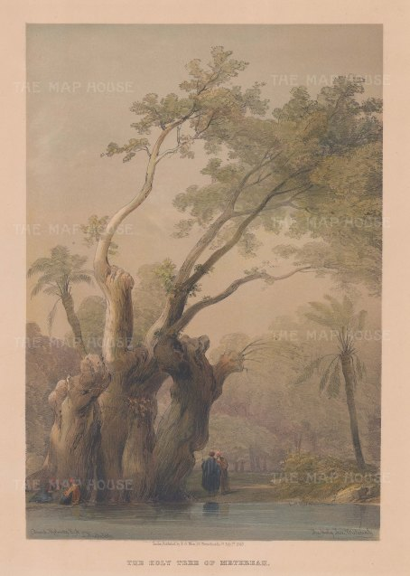 Holy Tree of Metereah.