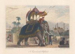 Elephant: Caparisond (in Ornamental Dress). After William Daniell.