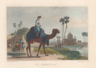Camel: Arabian camel with a head harness. After William Daniell.