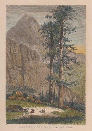 View near the Yosemite valley.