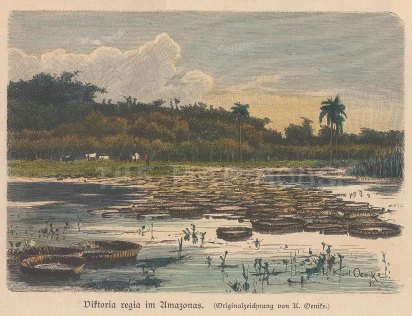 "Geiltbeck: Amazon. 1897. A hand coloured original antique wood engraving. 5"" x 4"". [SAMp1113]"