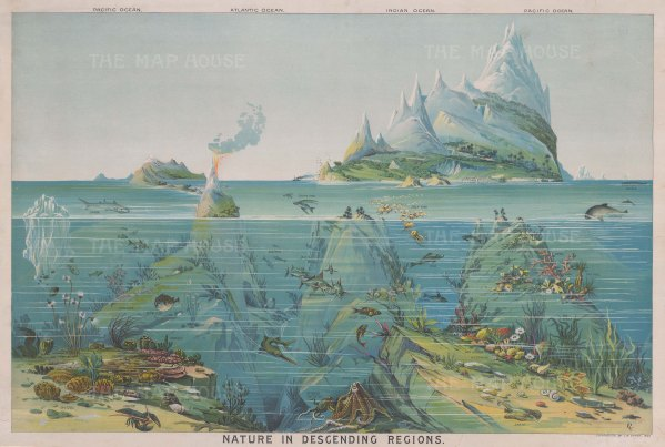 Nature in Descending Regions: Comparative chart of the World's oceans and the different species that live within them.