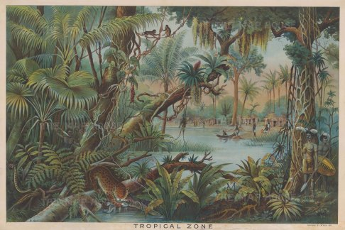 Tropical Zone: Educational chart showing the flora, fauna, and inhabitants of a tropical environment.